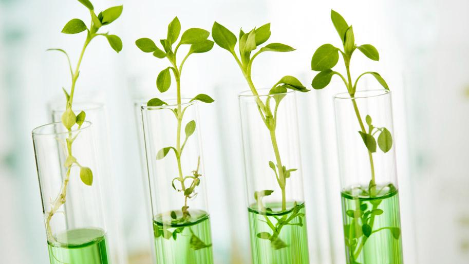 Grüne Pflänzchen wachsen aus Reagenzgläsern.